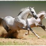Значение лошади в жизни человека