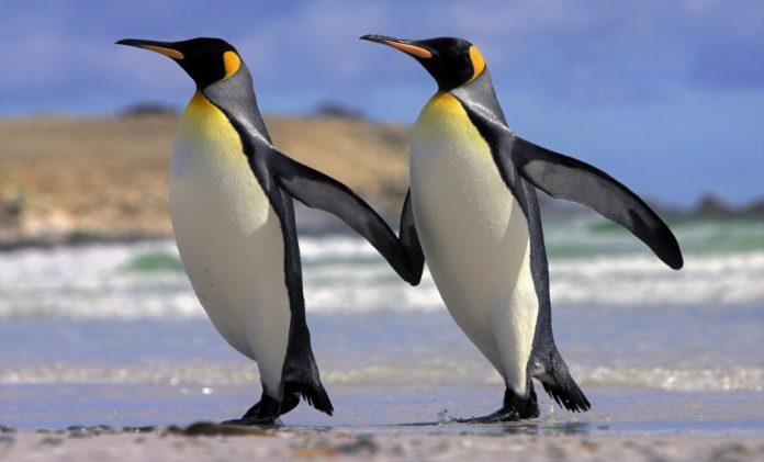 Почему пингвины не живут в Арктике?