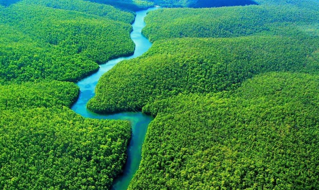 Фотография лесов Амазонии