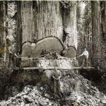 Секвойи – самые высокие деревья в мире