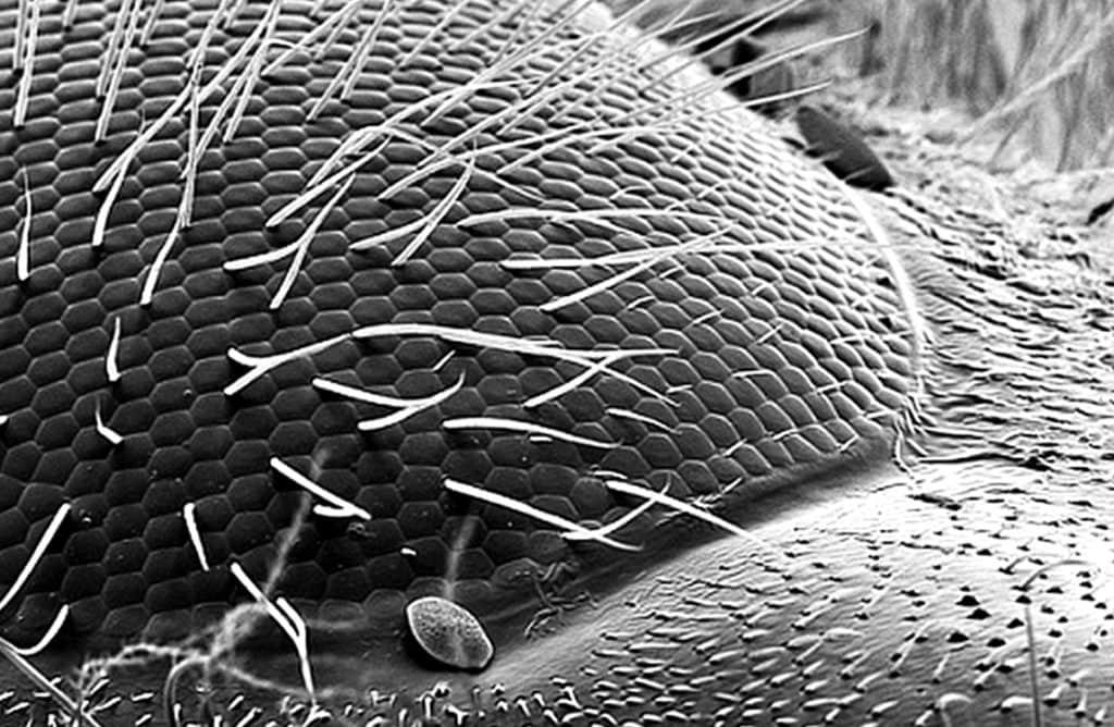 Макросъемка фасеточного глаза