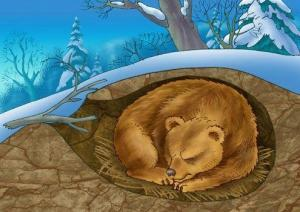 Медведь в спячке