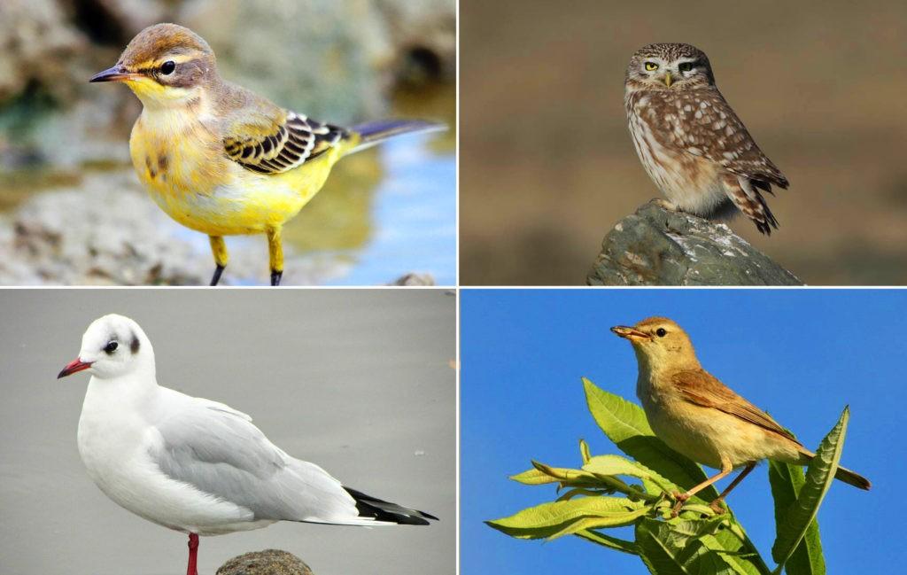 Мелкие хищные птицы
