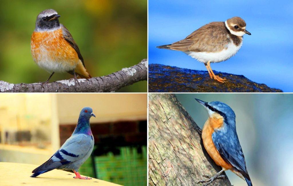 Мелкие всеядные птицы Подмосковья