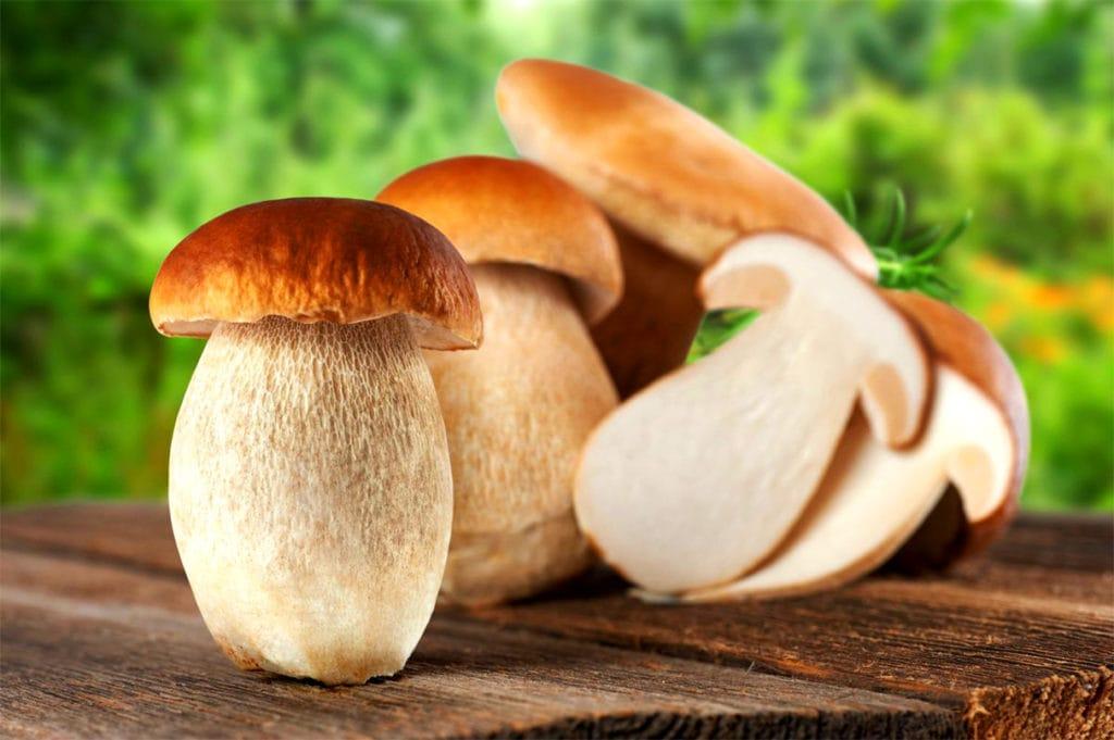 Молодые белые грибы
