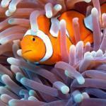 Интересные факты о морских обитателях