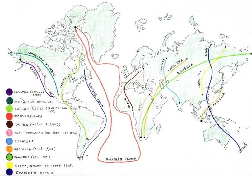 Маршруты миграции птиц