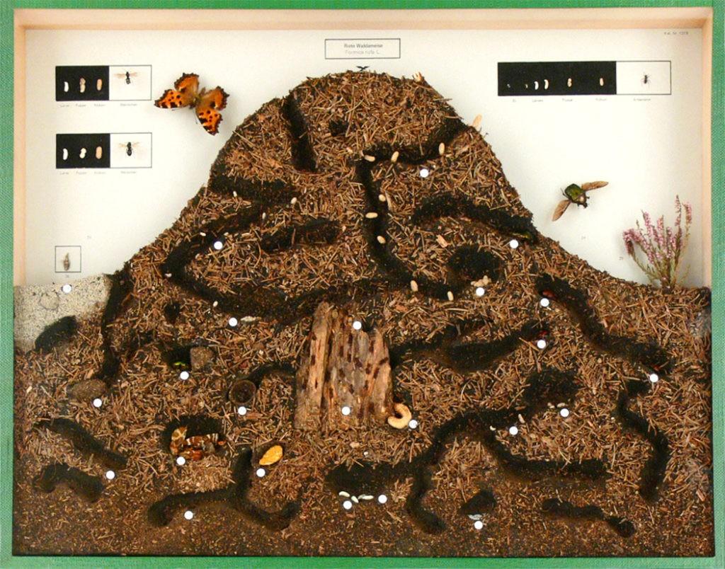 Вид муравейника изнутри