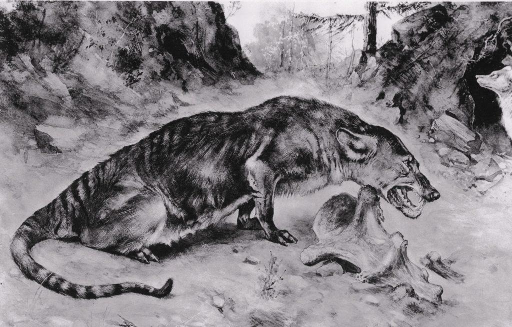 Рисунок мезонихии - предка китообразных