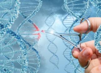 Определен защитный механизм мутаций генов
