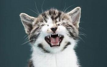 Мяуканье кошки