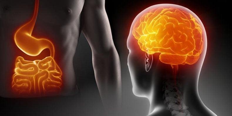 Ученые установили взаимозависимость между крупным мозгом и длинным кишечником
