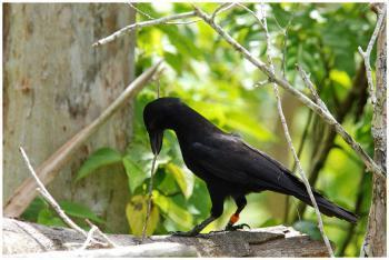 Самые умные виды птиц