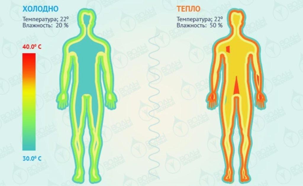 Наглядное изображение температуры тела человека в зависимости от влажности воздуха
