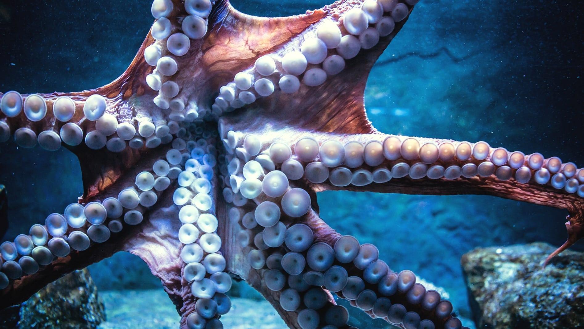 Нижняя часть осьминога