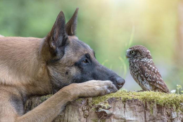 Коротко о животных
