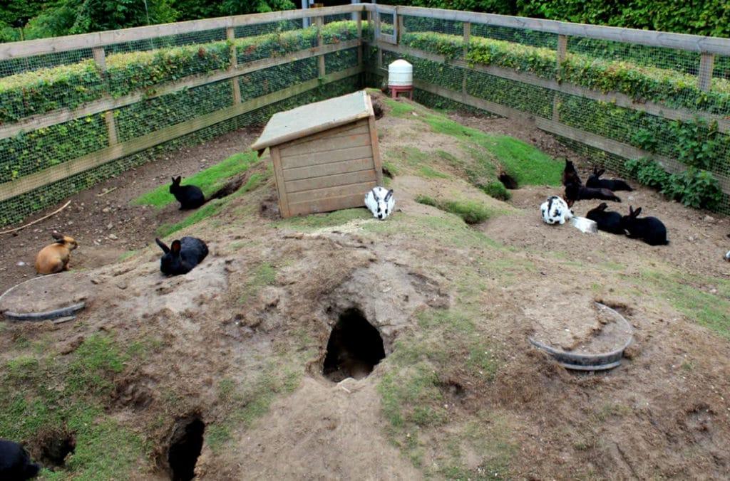 Кроличьи норы