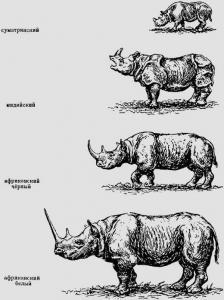 Размеры носорогов