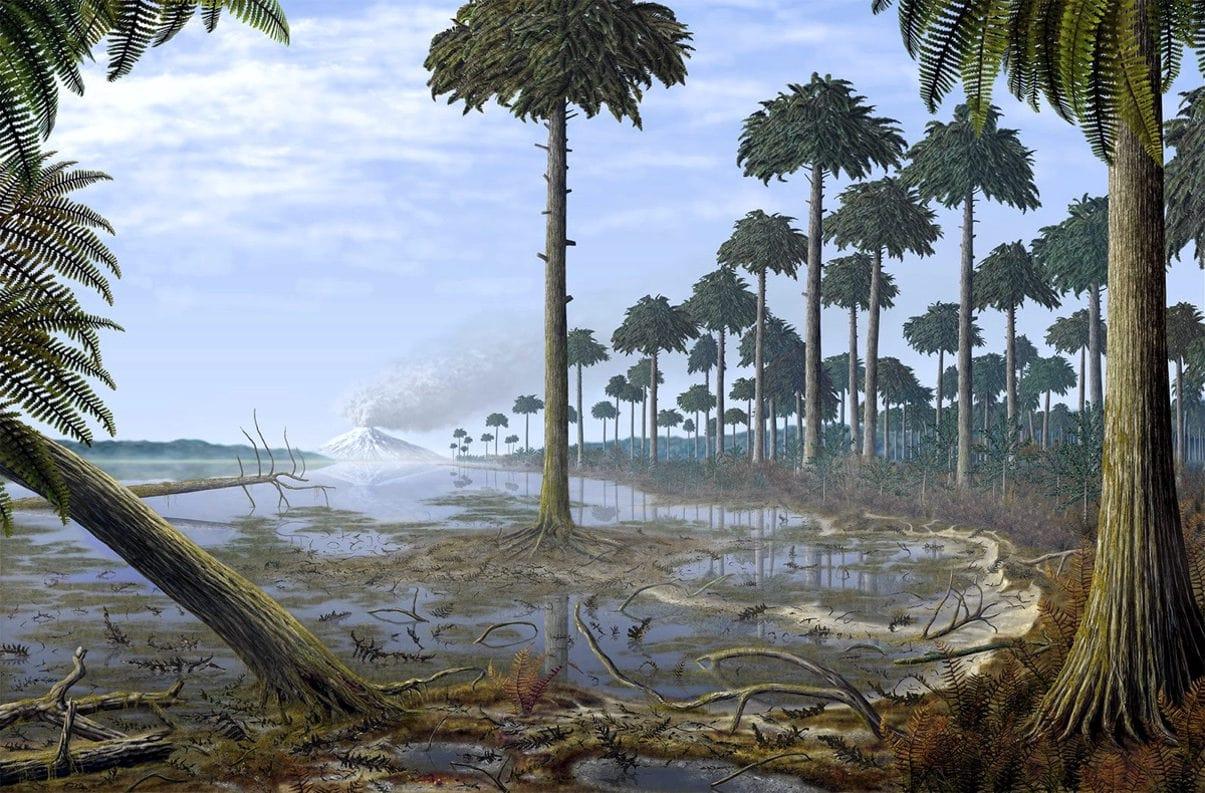Археоптерисы — одни из первых деревьев Земли