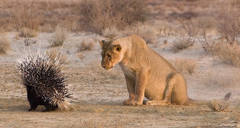 Обучение охоте