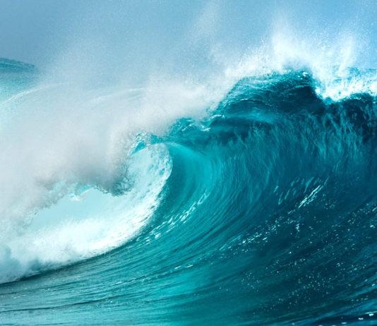 Океаны мира: названия, описание, площадь, глубина, растения и животные