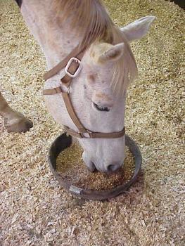 Кормление лошади овсом
