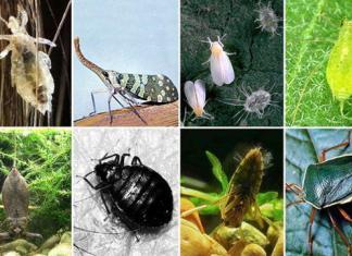 Опасные насекомые на даче