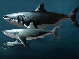 Самые опасные виды акул