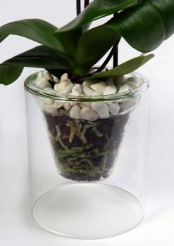 Корневая система орхидей требует наблюдения