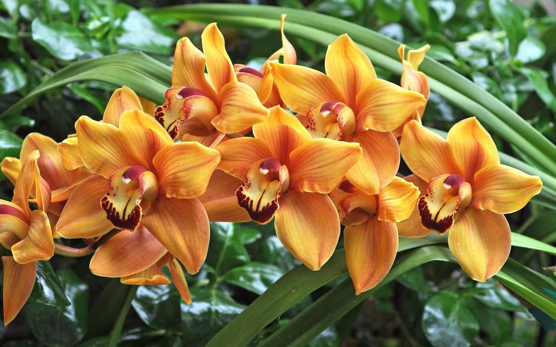 Золотая орхидея картинки