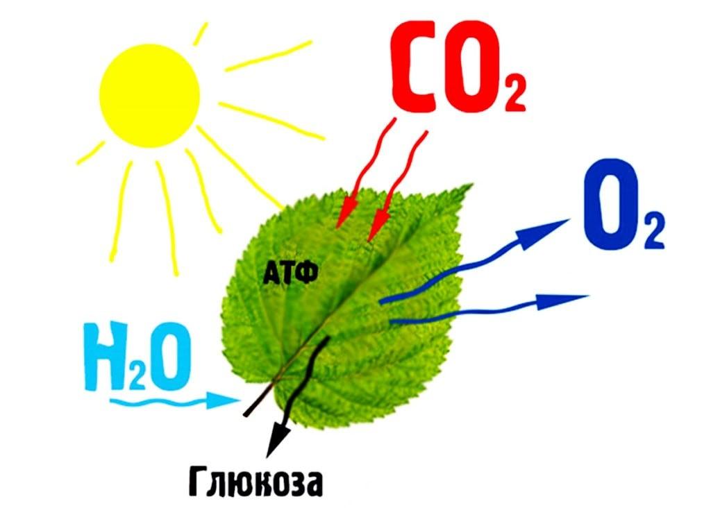 Образование органических веществ