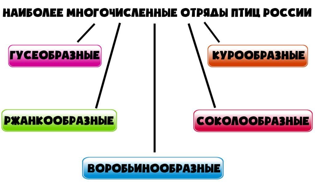 Наиболее многочисленные отряды птиц России