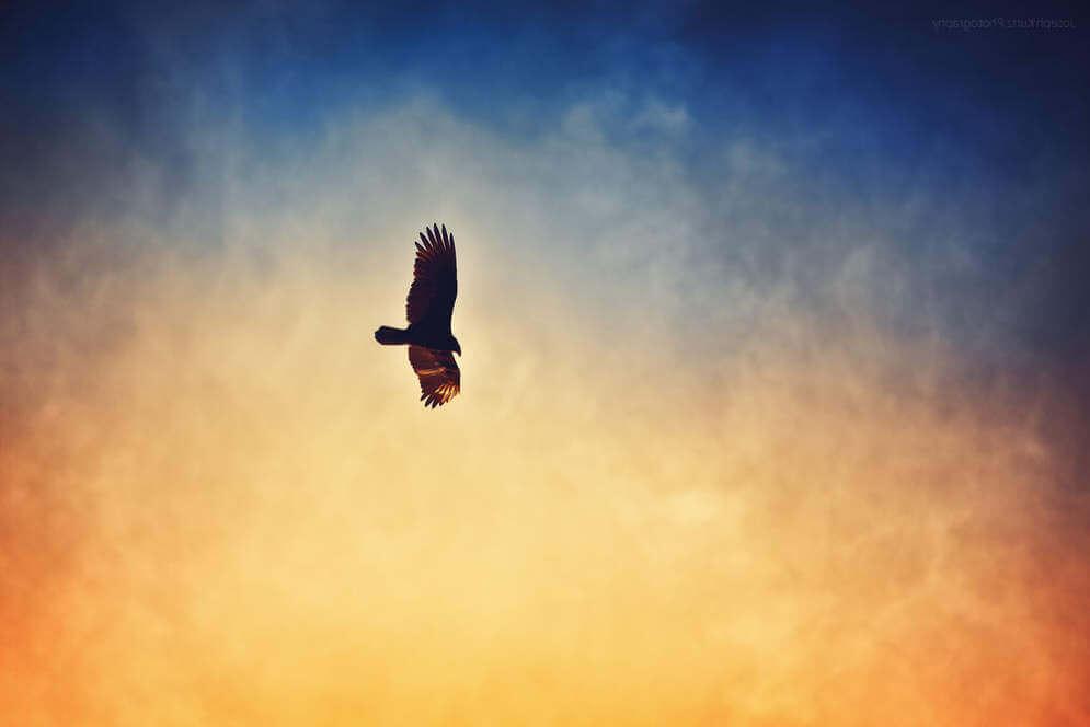 Парение птицы