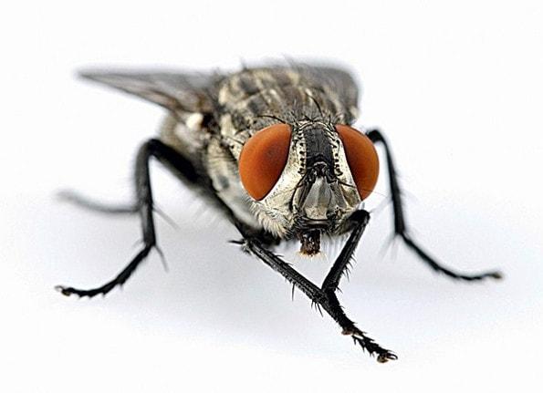 Почему мухи трут конечности друг о друга?