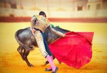 Почему быки реагируют на красный цвет?