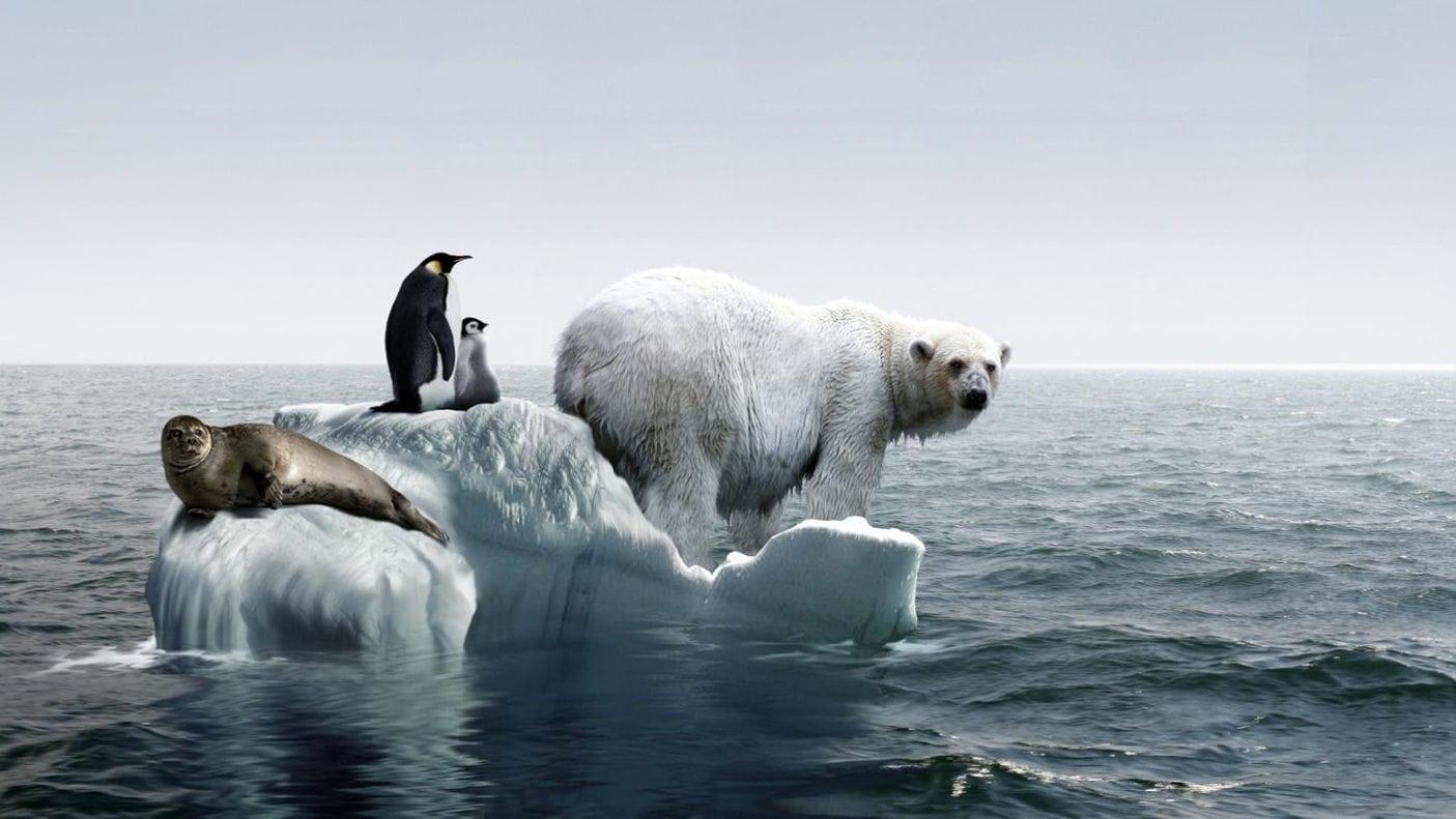 Почему белые медведи не едят пингвинов?