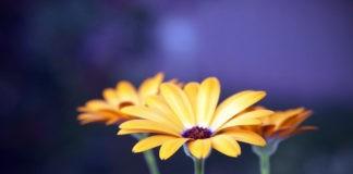 Почему некоторые цветы закрываются на ночь?