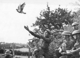 Почему почтовые голуби летят в нужное место?
