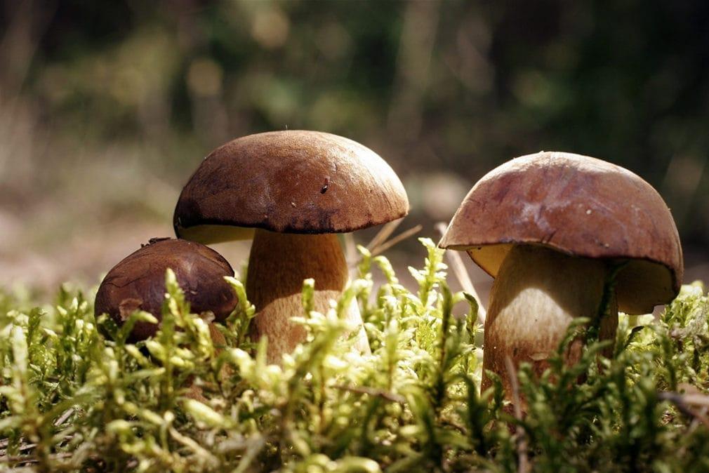 Почему грибы не растения?