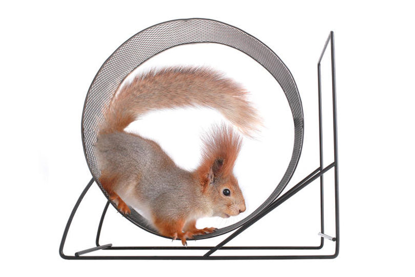 Почему хомячки и белки бегают в колесе?