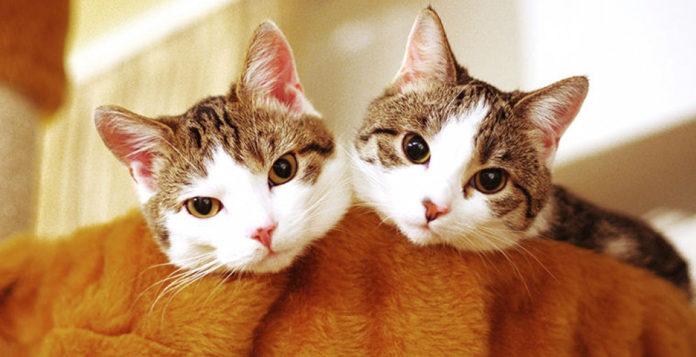 Почему кошки откликаются на «кис-кис»?