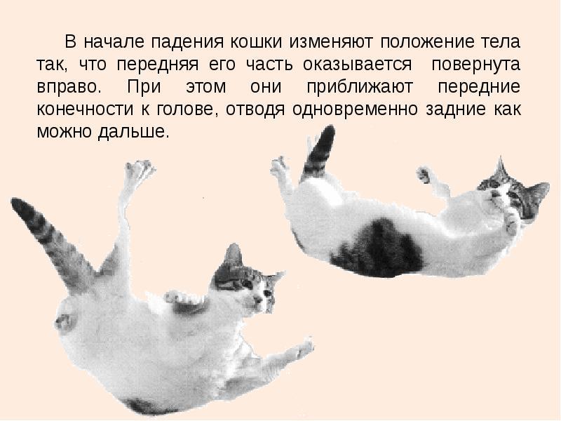 Начало падения кошки