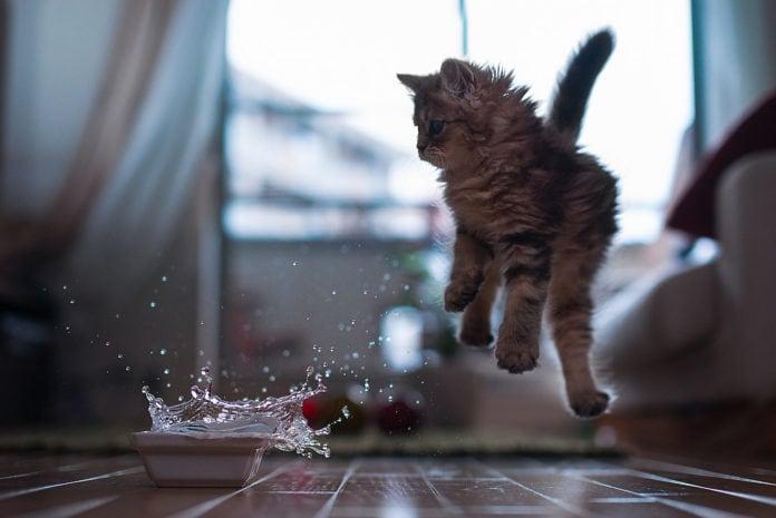 Почему кошка падает на лапы?