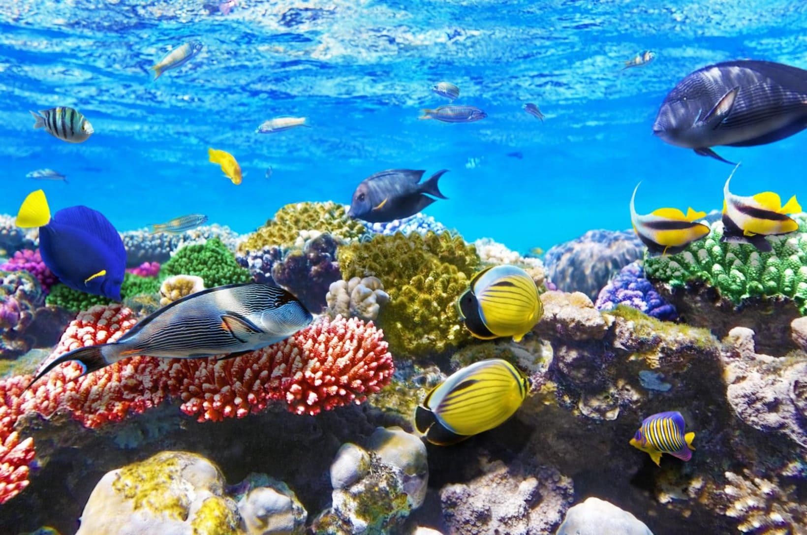 Почему Красное море называется Красным?