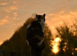 Почему кошки забираются на самый верх?