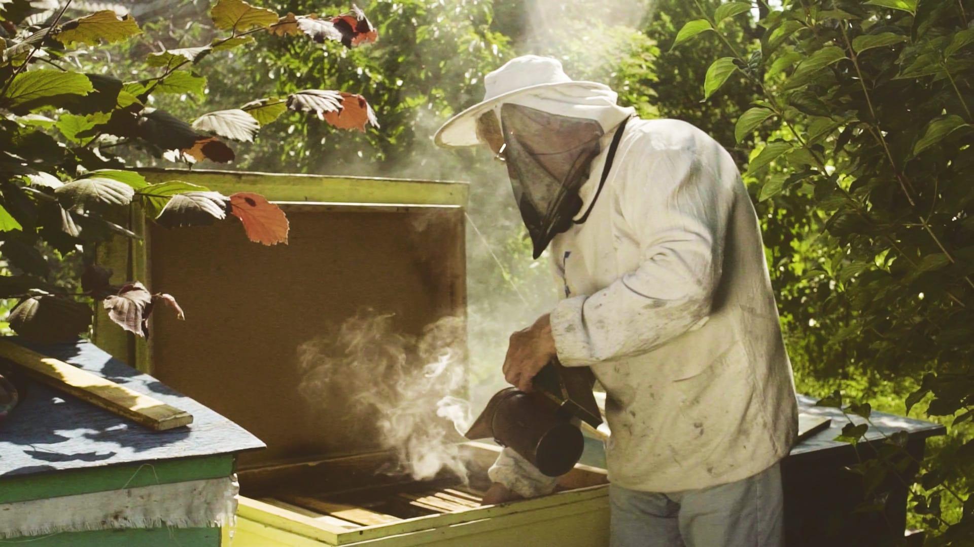 Усыпление пчел с помощью дымаря