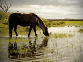 Почему лошадь нельзя поить сразу после скачки?