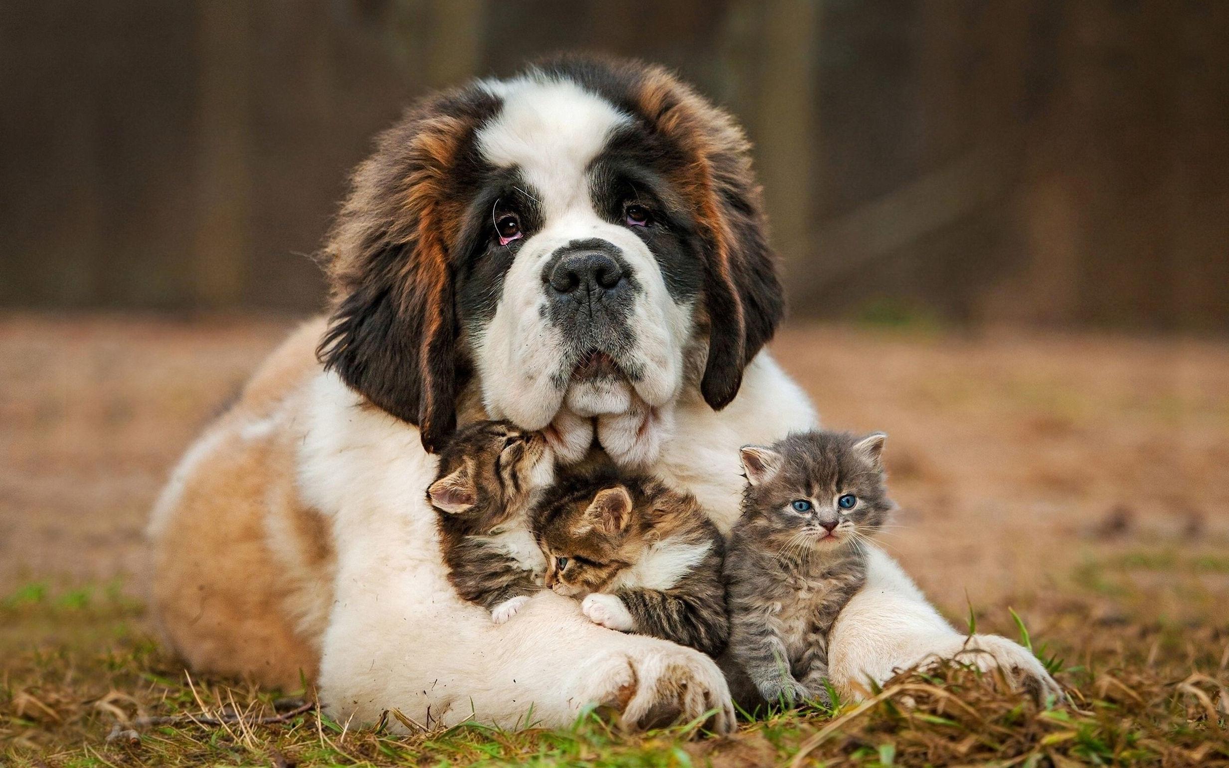 Почему пород кошек меньше, чем пород собак?