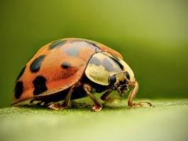 Почему насекомые падают с высоты без вреда для себя?