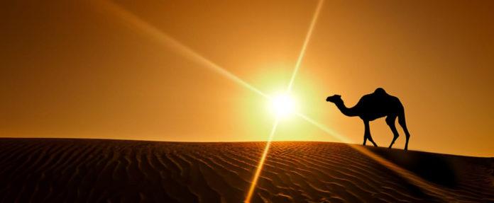 Почему верблюдам не мешает летящий в глаза песок?